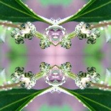 Natures Jewels